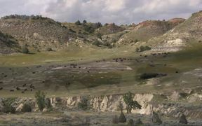 Badlands National Park: Bison Conservation