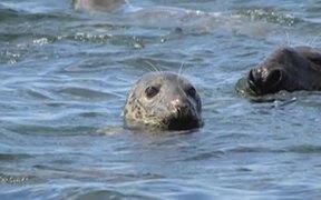 Seals of Cape Cod National Seashore