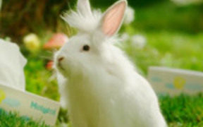 Mototol Commercial: Bunnies