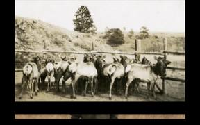Wind Cave National Park: The History of Elk