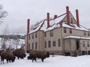 Yellowstone National Park: Rumor Control