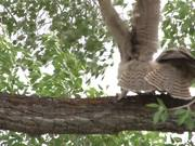 Yellowstone National Park: Backyard Owls