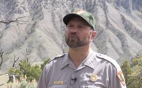 Yellowstone National Park: Bear Jams