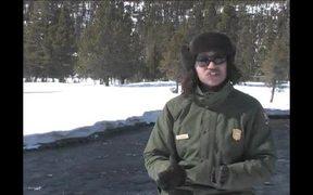 Yellowstone National Park: Winter Bird Watching