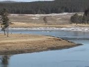 Yellowstone National Park: Winter Bird Watching
