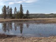 Yellowstone National Park: Chorus Frogs