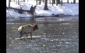 Yellowstone National Park: Winter Wildlife Viewing