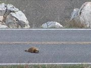 Yellowstone National Park: Respect for Wildlife