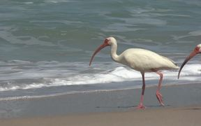 Ocean Beach Birds