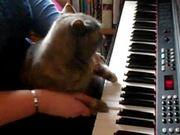 Darla Plays the Piano