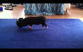 Funny Mini Piggy Tales 1