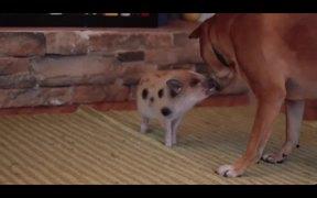 Cute Mini Piggy