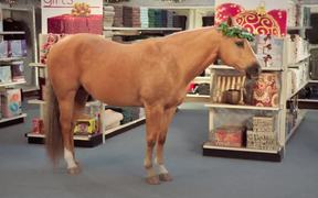 NC Education Lottery Commercial: Gift Horse