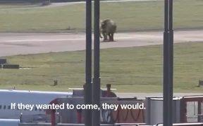 IFAW Commercial: Jumbo Elephant Landing