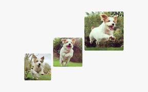 Best Friends Animal Society Video: Celebrity Pets