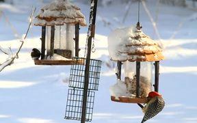 Birds On Feeders
