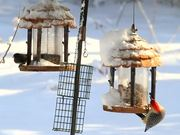Birds On Feeders