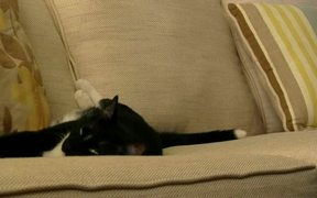 Cat Fighting Sleep