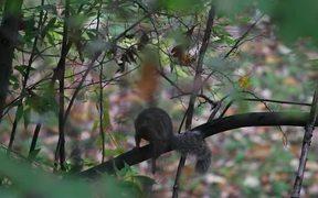 Squirrel Walk
