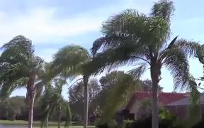Breezy Palm Trees