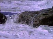 Ocean Waves and Birds