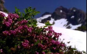 Mountain Scenery Royalty