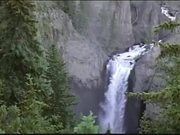 View of Waterfall and Elk in the Woods