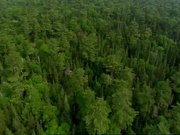 Forest and Water Aerial View