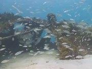 Undersea Exotic Fish
