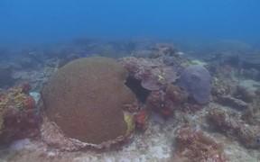 Tropical Scuba Diving