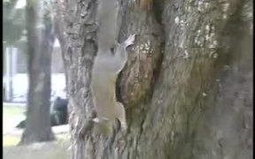 Two Fighting Squirrels