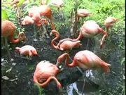 Sarasota Jungle Gardens Pink Flamingo