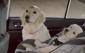 Subaru Campaign: Dog Tested