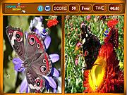 Butterfly Similarities