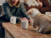 McVitie's Video: Corgi Puppies