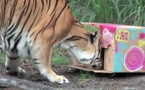 BIG CATS ATTACK!-Cardboard Carnage!