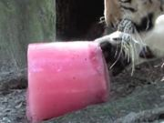 How To Make a TIGER POPSICLE!