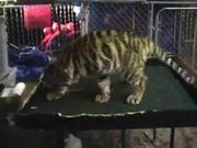 Baby Tiger Photo Booth