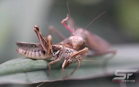 A real Bug's Life in UHD Macro View