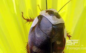 Predator Bugs in Macro View Ultra HD