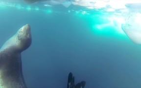 GoPro Campaign: Leopard Seal Encounter