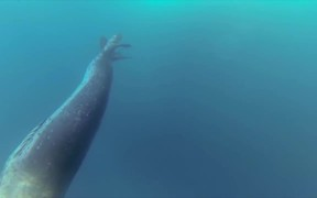 GoPro Campaign: Leopard Seal Encounter