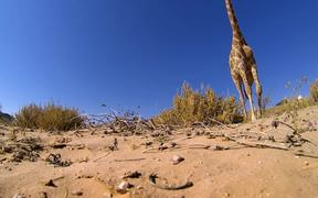 GoPro Video of the Week: Giraffe Kick