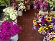 San Francisco Flower Market