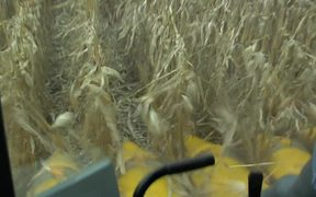 Cellulosic Biofuels Produced from Corn Cobs