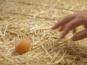 Intuit Commercial: Happy Hens