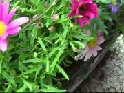 Flowers Water Drops