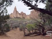 Nice View Through the Pinyon Pine Trees