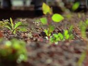 Green Roofs B-Roll