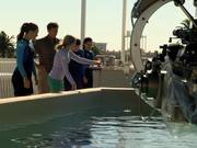 "Dolphin Tale 2 - ""Look Who's Running the Show"""